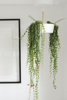"Hanging planter. ""This is from IKEA. I actually hate going there but sometimes I find a few gems. They are doing interesting collaborations with Ilse Crawford and Tom Dixon at the moment."""